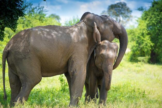 Éléphants dans la jungle