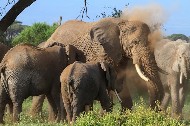 Éléphants dans le marais vert au kenya