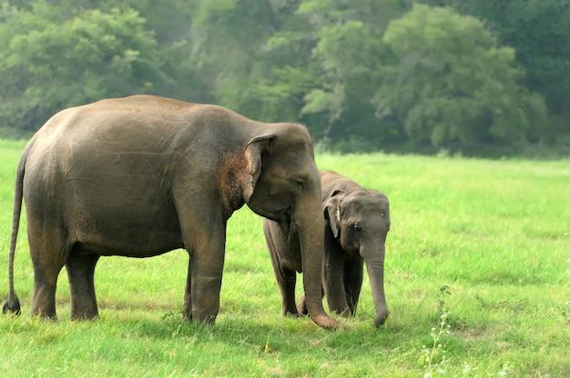 Éléphants dans la nature