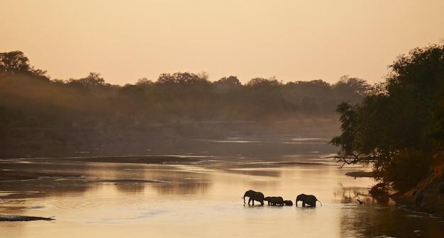 Éléphants dans le parc national de south luangwa
