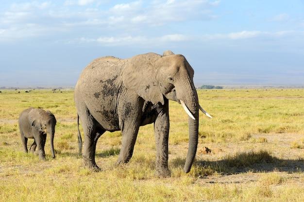 Éléphants dans la savane