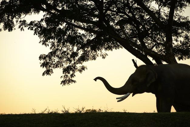 Éléphants et grand arbre le matin au milieu d'un paysage naturel.