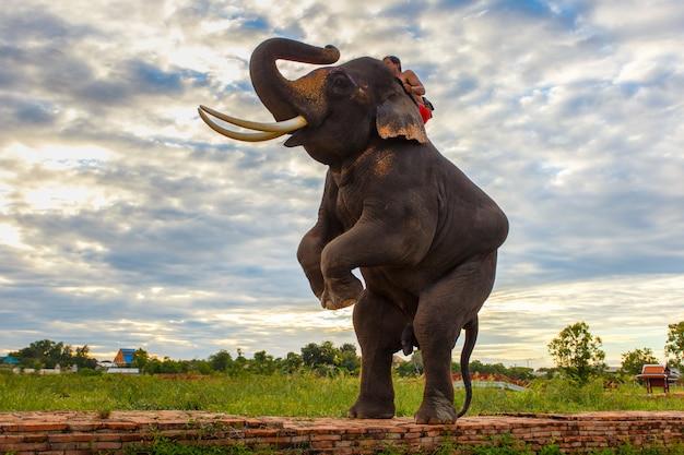 Éléphants et vieux stupa dans la province d'ayutthaya en thaïlande