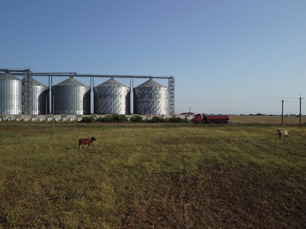 Élévateur à grains en métal élévateur à grains dans le stockage agricole de la zone agricole pour la récolte des céréales