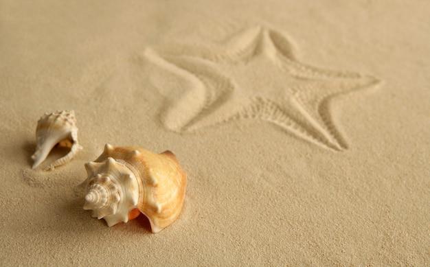 Empreinte d'étoile de mer sur le sable des caraïbes