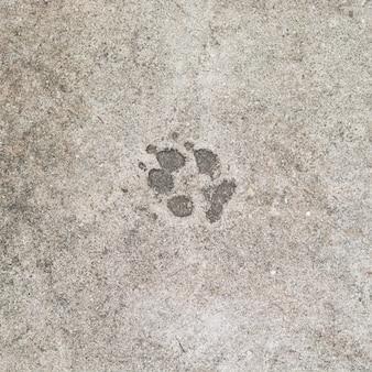 Empreintes de chien sur fond de sol en ciment