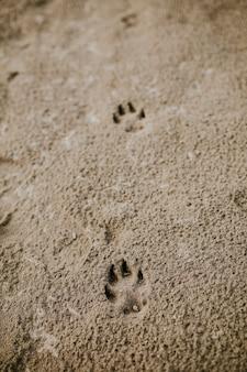 Empreintes de pas de chien mignon dans le sable de la plage