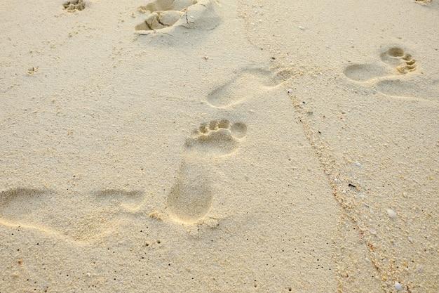 Empreintes de pas dans le sable humide près de la mer en journée ensoleillée