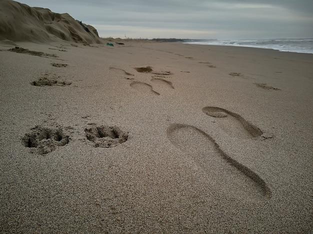 Empreintes placées côte à côte sur le sable : celles d'une personne et celles d'un chien qui se prolongent parallèlement dans le paysage.
