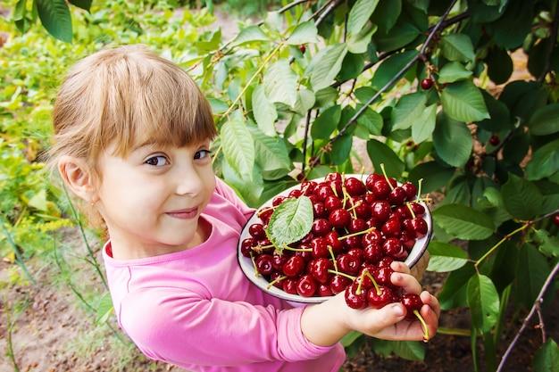 L'enfant cueille des cerises dans le jardin. mise au point sélective.