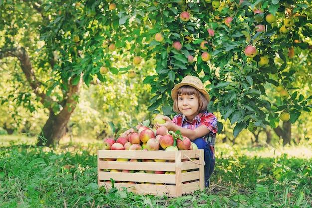 Enfant cueille des pommes dans le jardin dans le jardin.