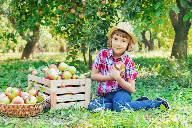 Enfant cueille des pommes dans le jardin dans le jardin