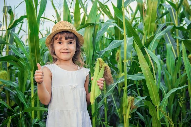 Enfant dans le champ de maïs. un petit agriculteur. mise au point sélective.