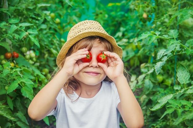 Un enfant dans un jardin avec des tomates.