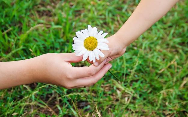 L'enfant donne la fleur à sa mère. mise au point sélective.