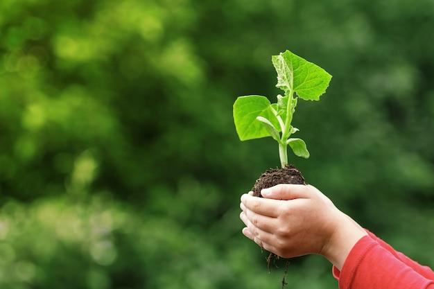 Un enfant est titulaire d'une jeune plante dans les mains sur le fond de couleur vert printemps