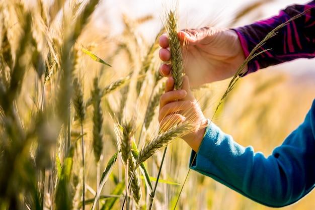Enfant, femme, tenue, mûrir, épi, blé