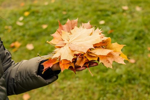 Enfant avec des feuilles jaunes dans ses mains jouent dans le parc.