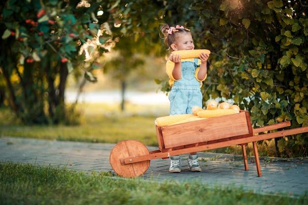 Enfant heureux avec des épis de maïs jaune dans la brouette. belle petite fille avec des épis de maïs. enfant heureux. récolte d'automne dans la brouette en bois.