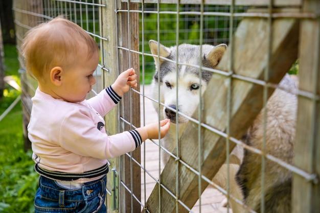 Enfant jouant avec des chiots de chien husky en finlande en laponie en hiver