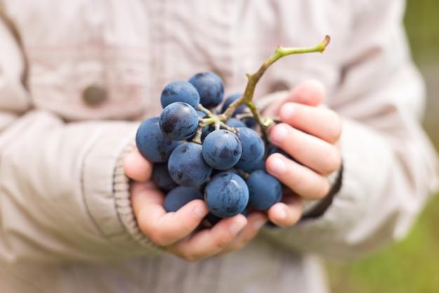 Enfant mains tenant un raisin mûr, gros plan