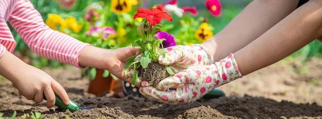 Enfant et mère plante des fleurs dans le jardin. mise au point sélective.