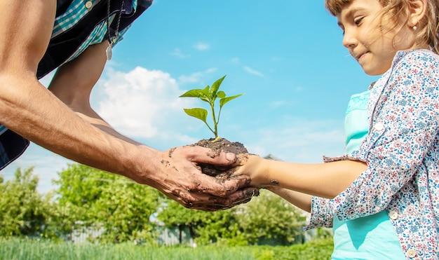 Enfant et père des plantes dans le jardin.