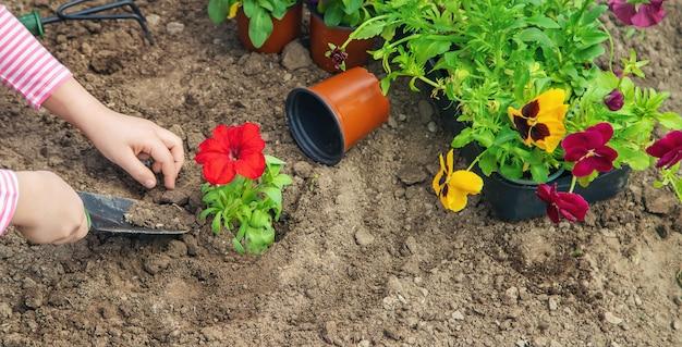 Un enfant plante un jardin fleuri. mise au point sélective.