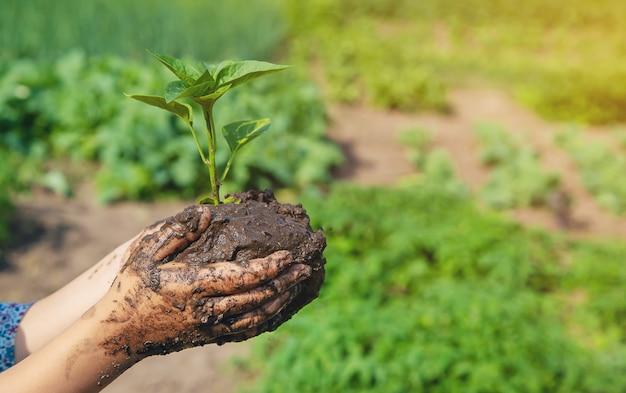Enfant des plantes et arrosage des plantes dans le jardin. mise au point sélective.