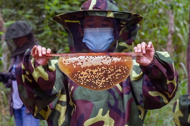 Un enfant récolte du miel dans la forêt tropicale naturelle de gunung kidul, yogyakarta, indonésie.