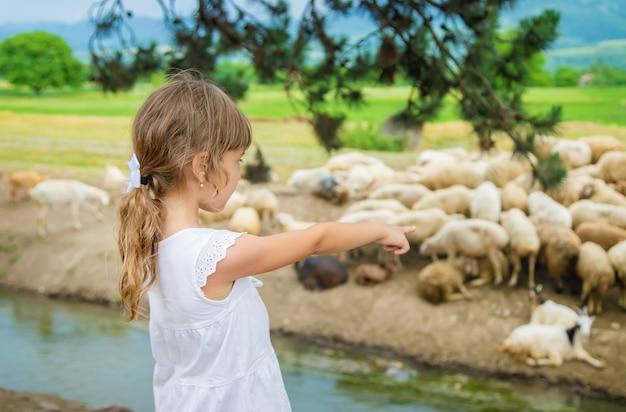 Un enfant regarde un troupeau de moutons. voyage en géorgie.