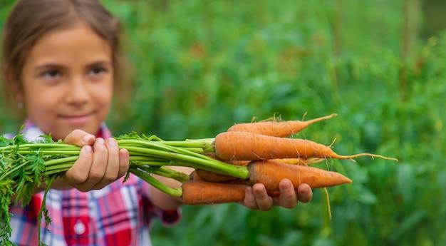 L'enfant tient la carotte dans ses mains dans le jardin. mise au point sélective. la nature.