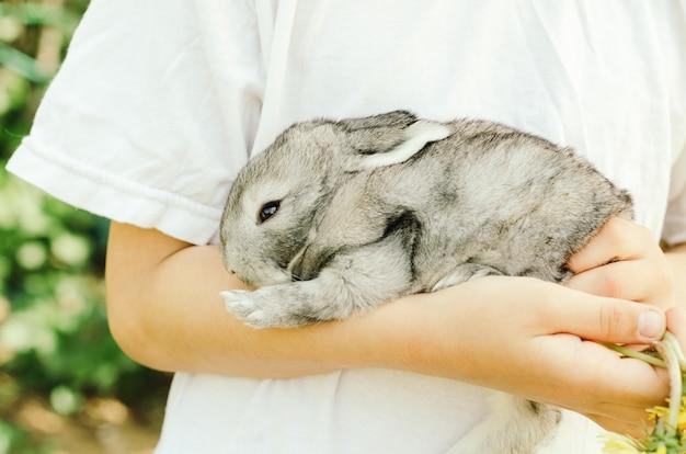 L'enfant tient un petit lapin gris dans les mains de verdure.
