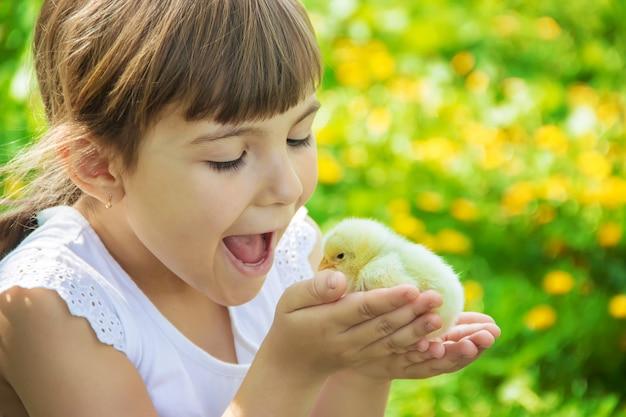 L'enfant tient un poulet dans ses mains. mise au point sélective.