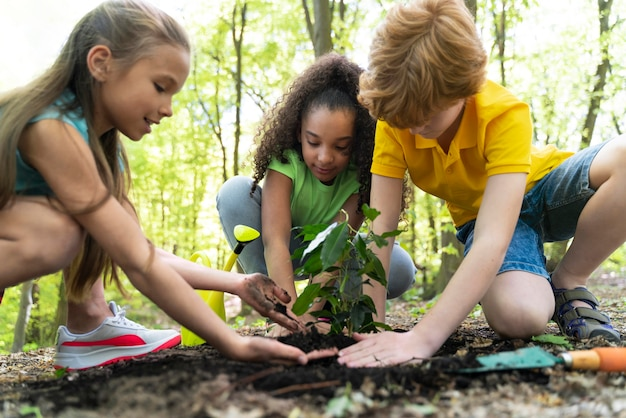Enfants plantant ensemble dans la forêt