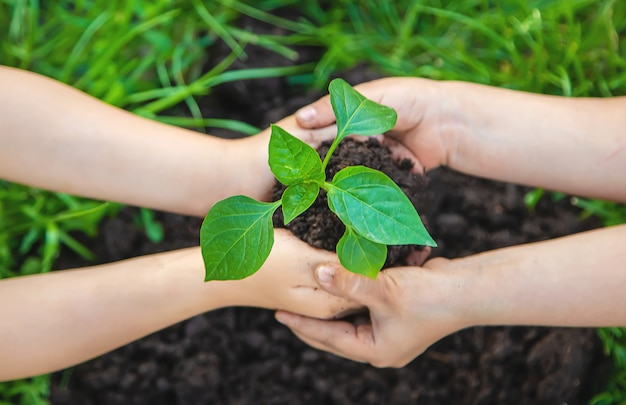 Les enfants plantent des plantes dans le jardin. mise au point sélective.