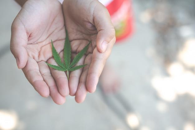 Enfants tenant des feuilles de marijuana.