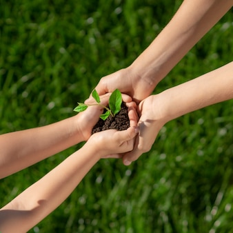 Enfants tenant une jeune plante verte dans les mains