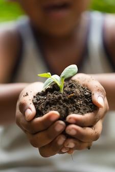 Enfants, tenue, jeune, semis, plante, mains, plante