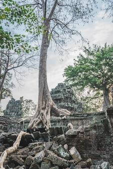 Énorme banyan tree ruines d'angkor wat panorama lever du soleil asie