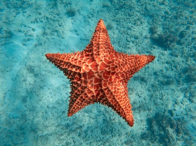 Énorme étoile de mer rouge sous l'eau dans le bleu clair concept de la vocation de vacances et de détente