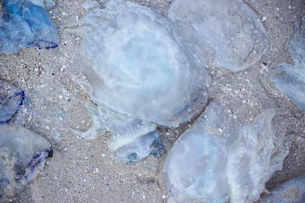 D'énormes méduses bleues sur une plage de sable. invasion de méduses. vue de dessus, mise à plat.