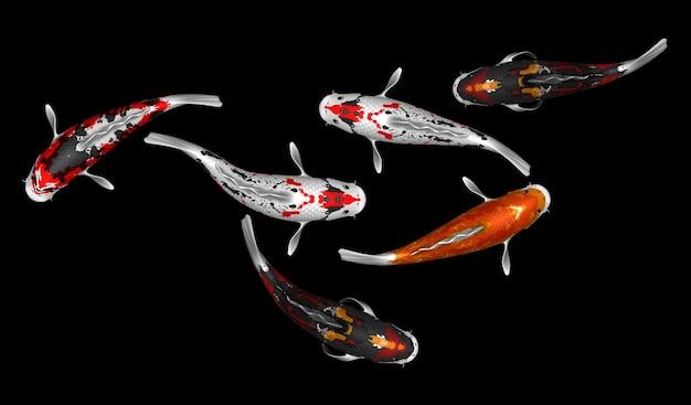 Ensemble de 6 rendu 3d de poissons koi colorés