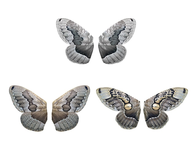 Ensemble d'ailes de papillons tropicaux. isolé sur fond blanc. modèle pour la conception.