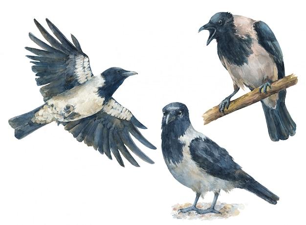 Ensemble aquarelle de corbeaux