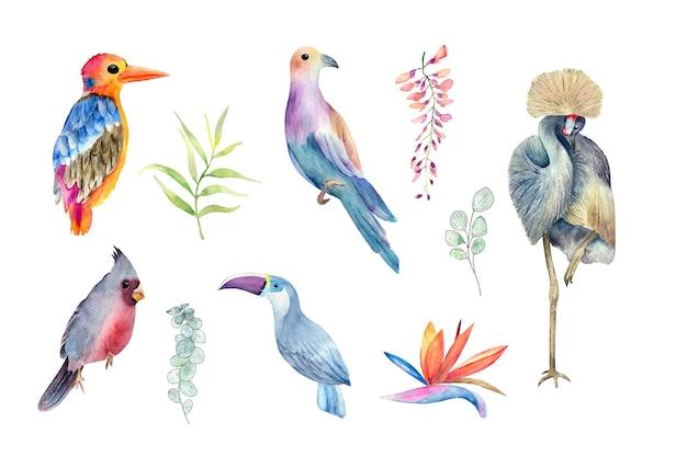 Ensemble aquarelle d'oiseaux tropicauxplantes fleurs ahd