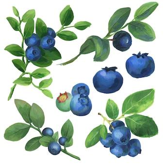 Ensemble de baies acryliques de collection de branches de bleuets dessinés à la main isolé sur blanc
