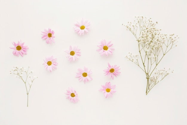 Ensemble de boutons de fleurs de marguerite rose près de brindilles