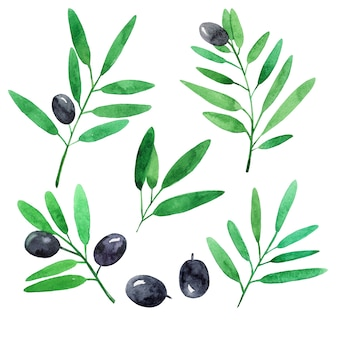 Ensemble de branches d'olives. illustration aquarelle.