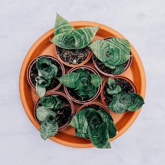 Ensemble de cactus en pots sur une table en marbre. art végétal minimal à plat